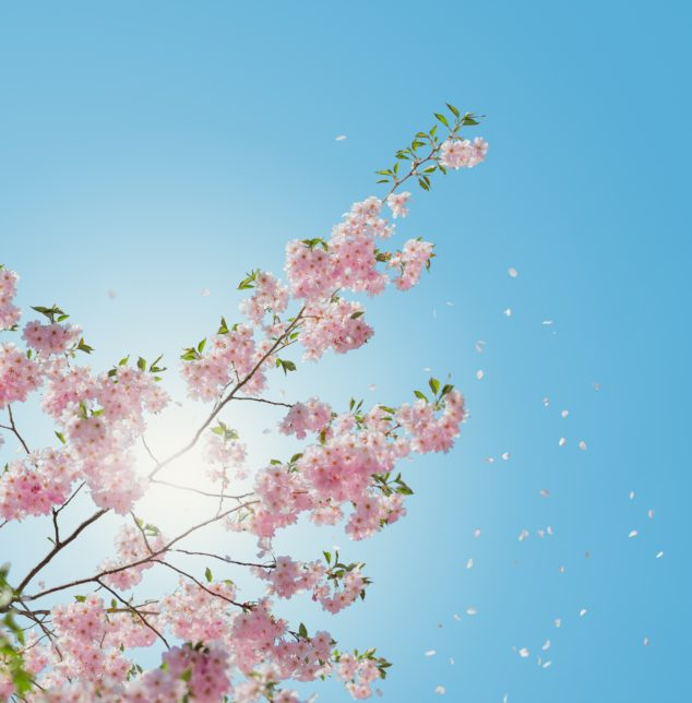 Flowering tree with blue sky, the Chicago Heights therapists are educated to hear your concerns about your relationship.