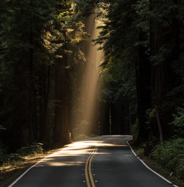 A road through forest with sun shining through a spot, for guidance on your parenting struggles talk to a Naperville therapist.